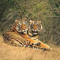 Ranthambore Tigers Reserves
