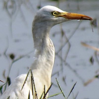 Attractions of Sultanpur Bird Sanctuary