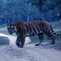 Pench Wildlife Sanctuary